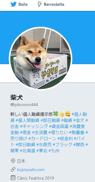 個人間融資柴犬